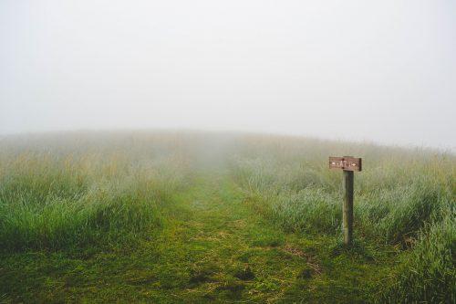 Keuzes maken natuur - Een grasland met 2 wegen en een bordje