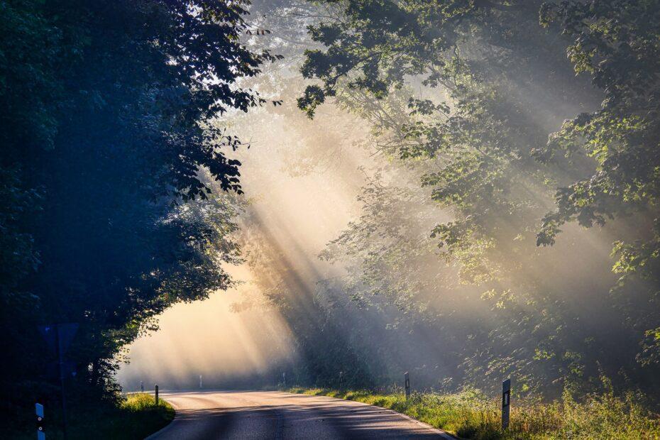 bomen met zonlicht