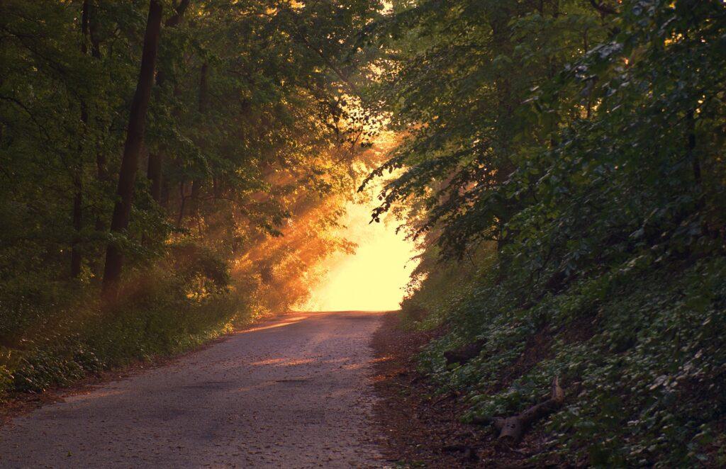 bos licht 1