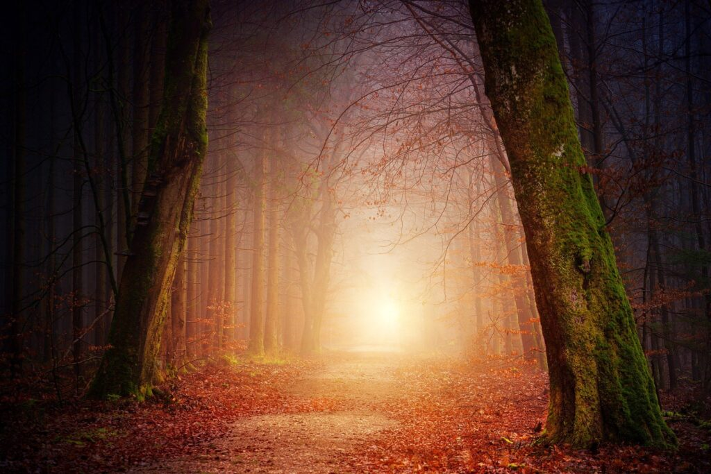 bos met licht