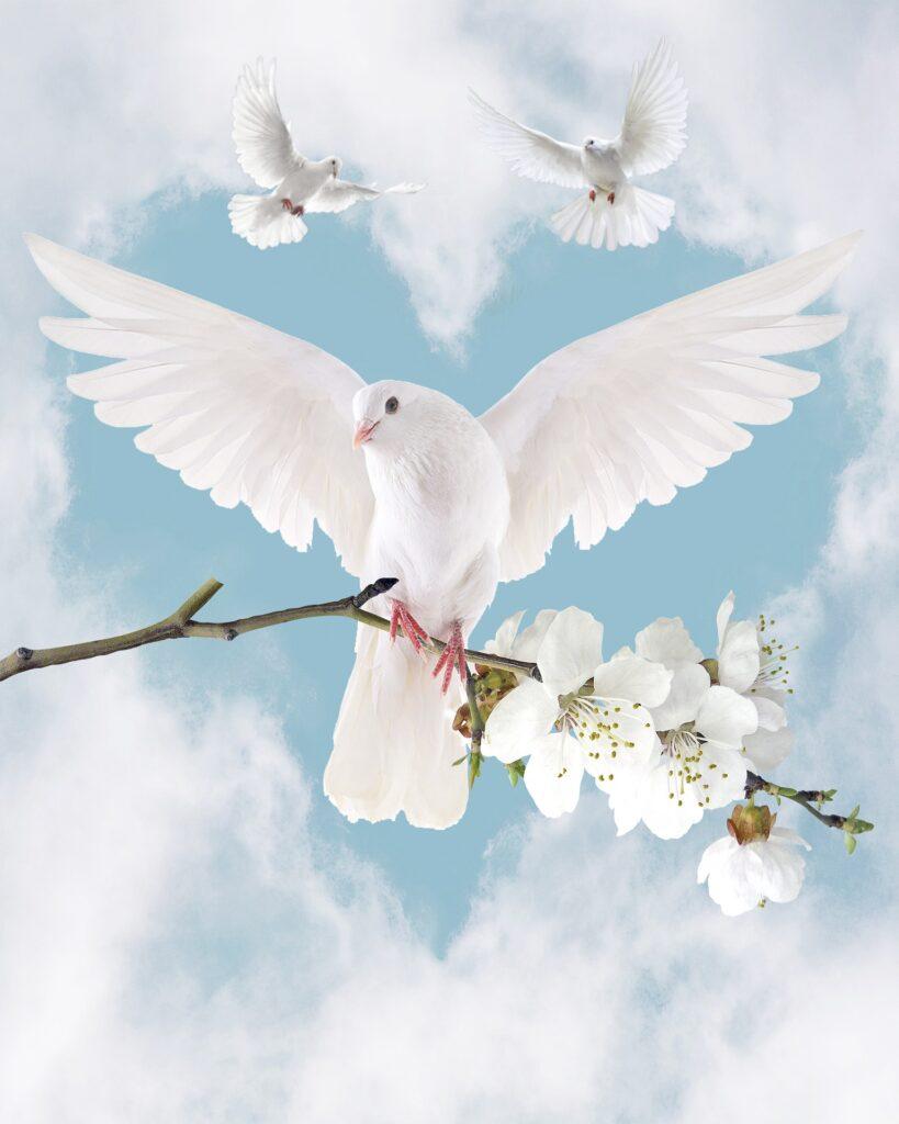 duiven in de vorm van een hart